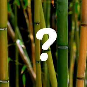bambou mutsjes